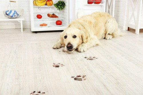 Best Pet-Friendly Flooring